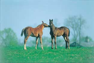 Foals playing - Foal Assist